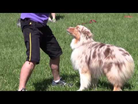frisbee dog training freestyle figure 8