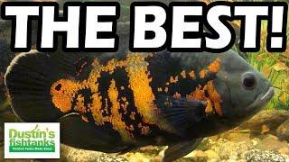 Aquarium Fish TOP 5 BEST FISH …