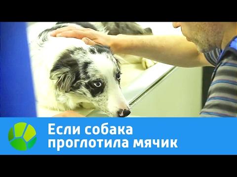 Вопрос: Что делать, если собака съела шерстяную варежку?