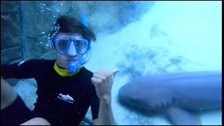 EPIC SWIM with SHARKS, DOLPHINS, & STINGRAYS at Discovery Cove in Florida!