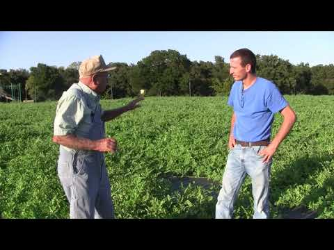 Watermelon Patch at Ardmore Adventist Academy Ep 47