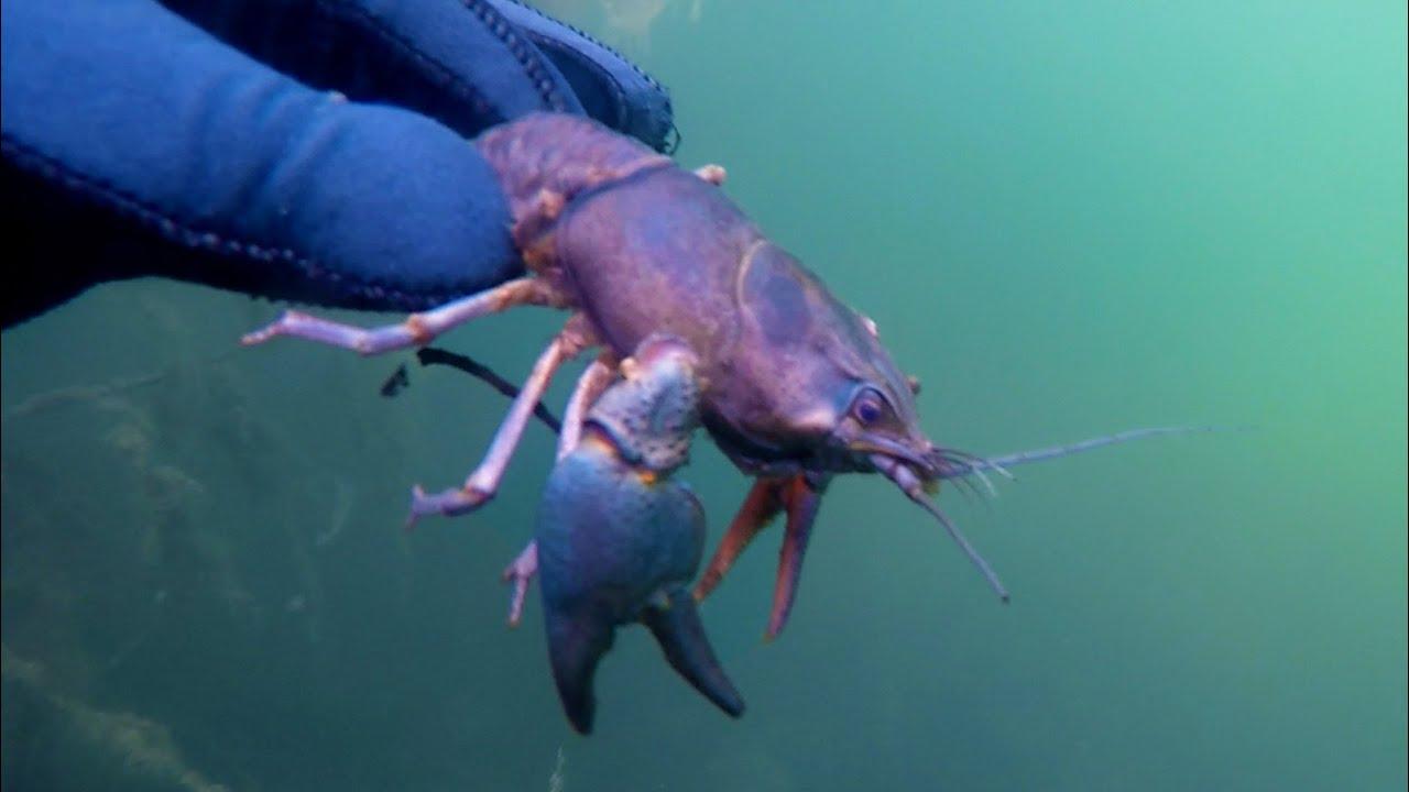 Подводная охота #26 рыбное озеро