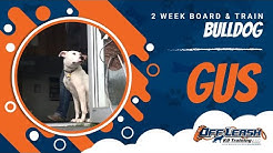 2-Week Board and Train, Gus!  Dog Boarding and Training Northern Virginia