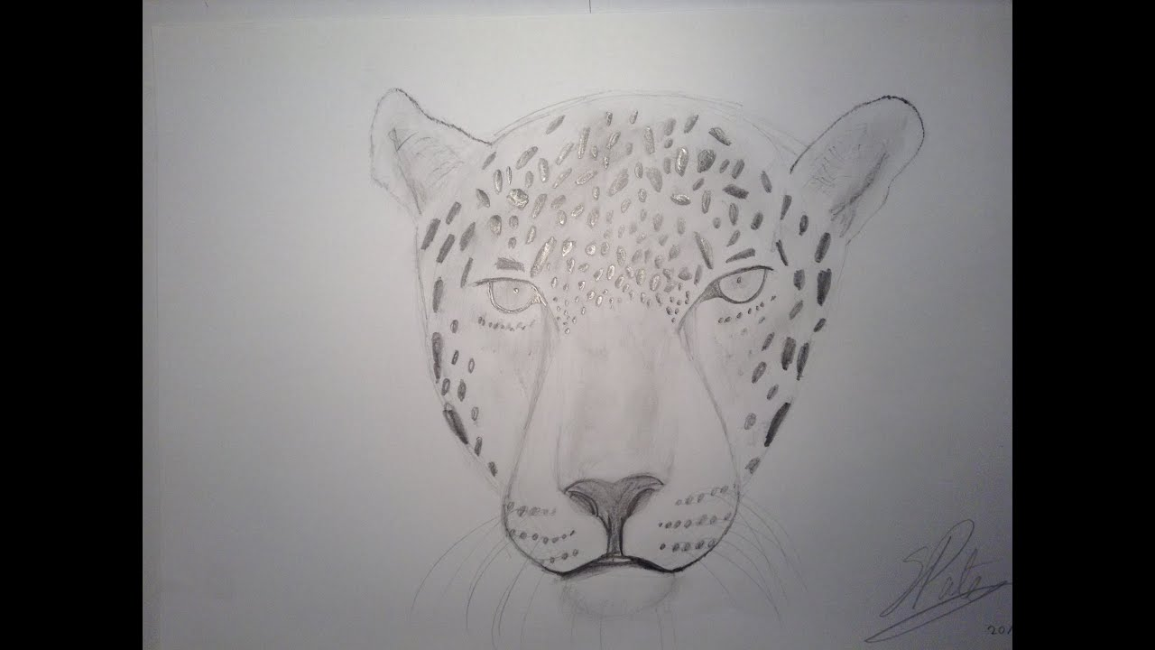 drawing a jaguar time lapse youtube