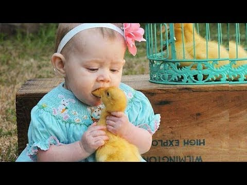 Cute Bird Falling in Love with Baby 🐥🐥🐥 Funny Parrots and Babies Compilation