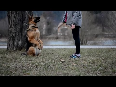 ..: Sara - 11 months together - dog tricks (not official) :..