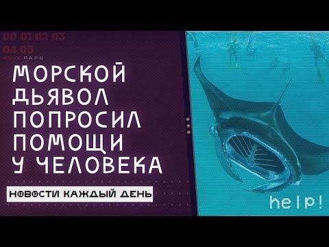 Морской дьявол попросил помощи у людей | Новости Каждый День