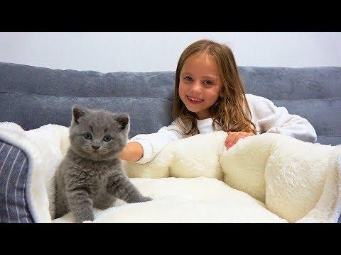 Наш питомец Маленький КОТЁНОК выбираем Домик и Кличку для кота ВЛОГ
