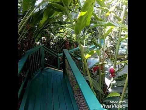 Botanical garden in st. Thomas, Virgin Islands