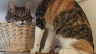 ПРИКОЛЫ С ЖИВОТНЫМИ Смешные Животные Собаки Смешные Коты Приколы с котами Забавные Животные 107