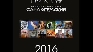 Боди-Арт Календарь 2016 - заповедных животных Горного Алтая. Body-art calendar Altai animals