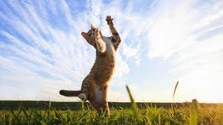 Dancing cats - Танцующие коты.