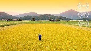 水田 - The Rice Fields