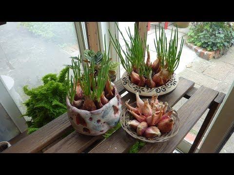魔法DIY種子盆栽 - 第六集( DIY Taiwan Bonsai Tree Seeds Ep.6 English SUB CC )