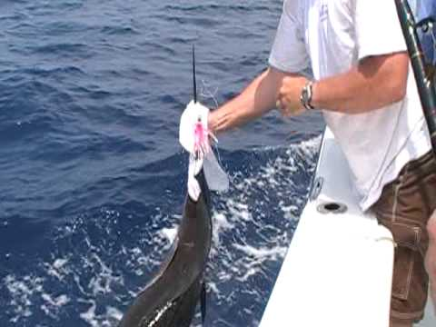 Jacksonville offshore charters jacksonville deep sea for Deep sea fishing jacksonville