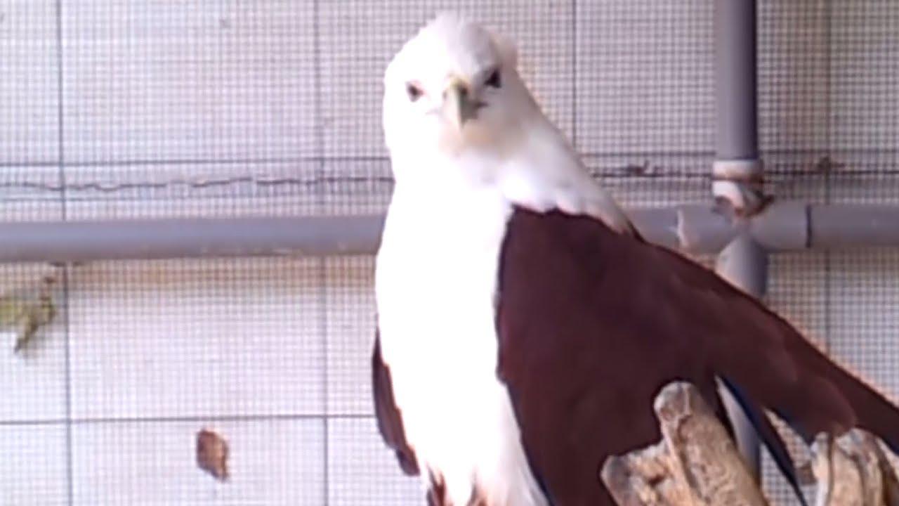9100 Koleksi Gambar Binatang Burung Elang HD Terbaru