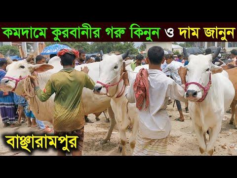 রাঙ্গুনিয়ায় জমজমাট হচ্ছে পশুর বাজার, বেড়েছে মহিষের কদর   Gorur Haat   Korbanir Haat   Cplus from YouTube · Duration:  2 minutes 24 seconds