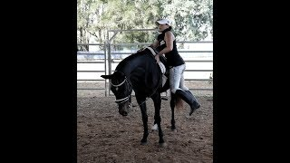 BLACKIE MOUNTING AND DISMOUNTING UNHELD LARGE OPEN AREA