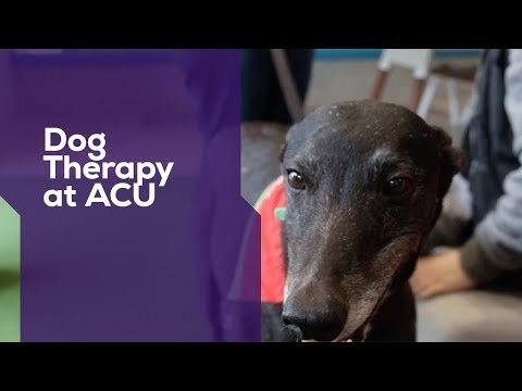 ACU I Dog Therapy at The Track