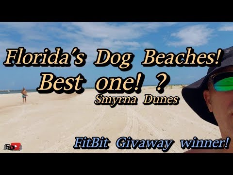 Floridas Dog Beaches! The Best One!? Also Winner Drawn For Giveaway!