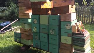 Learning Beekeeping - Apiary Organization - Keep it Cleaned Up!