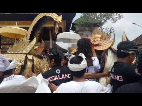 Tradisi 7 Tahun Sekali Melancaran Ring Desa Kedisan Tegallalang
