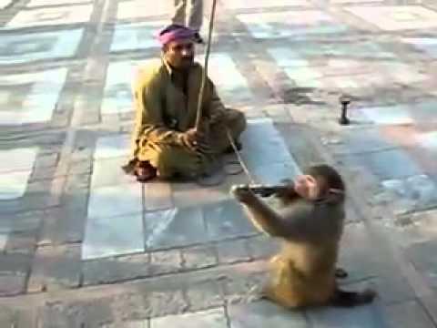 Pakistan army SSG Monkey Commando Unit Funny Video   YouTube