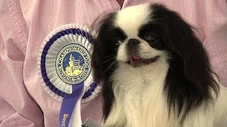 Windsor Championship Dog Show 2014 - Toy Group