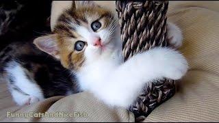 Wake up Cute Kittens!