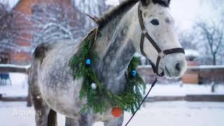Новогодняя.Фотосессия.С лошадьми.Фотограф Аня Пономарёва