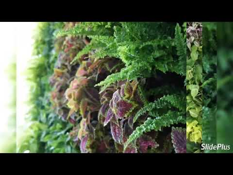 Thai Garden Design How To Build Amazing Green Vertical Gardens
