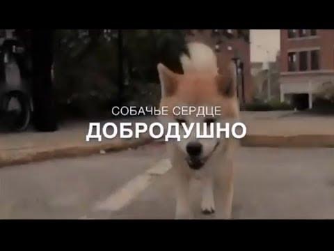 Собачье сердце добродушно I Автор стихотворения Андрей Медведев