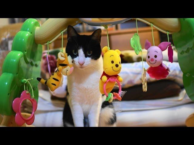 メリーで遊ぶ猫 – Cat Plays Baby Toy. –