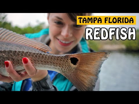 TAMPA REDFISH, SPOTTED SEATROUT - First Florida Inshore Fishing Experience | Fishing With Rod