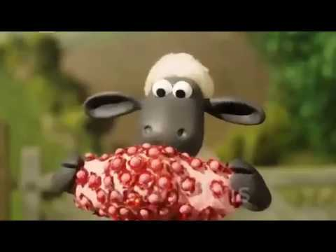 الحلقة التي يبحث عنها الجميع Champ The Sheep في حلة جديدة شون دي شيب 2018 Youtube