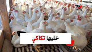 «خليها تكاكي» حملة جديدة لمقاطعة الغلاء المفاجئ لأسعار الدجاج