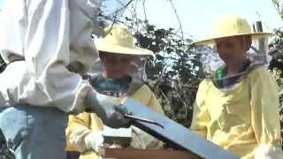 Kinder & Natur: Die Bienen-AG der GS Moselweiß