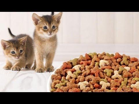 Корм для кошек своими руками рецепты 18