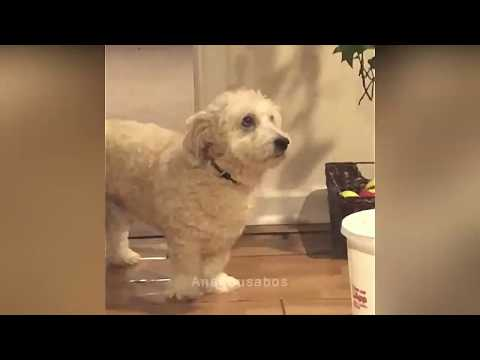 Try Not To Laugh Challenge - Funny Cat & Dog Vines Compilation 2018