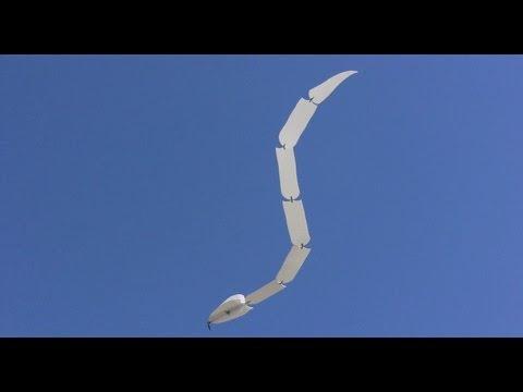 空を飛ぶ蛇、羽ないのにどうやって飛行してんの?