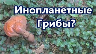 getlinkyoutube.com-Инопланетные грибы Странные деревья и ползающие растения. Природа Неподражаема!.