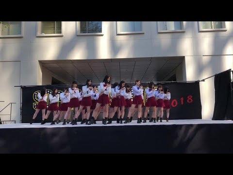 PRODUCE48 Nekkoya(내꺼야)ネッコヤ COVER 学祭 일본 대학생