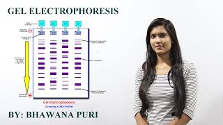 GEL ELECTROPHORESIS( BIOLOGY) FOR CLASS XII
