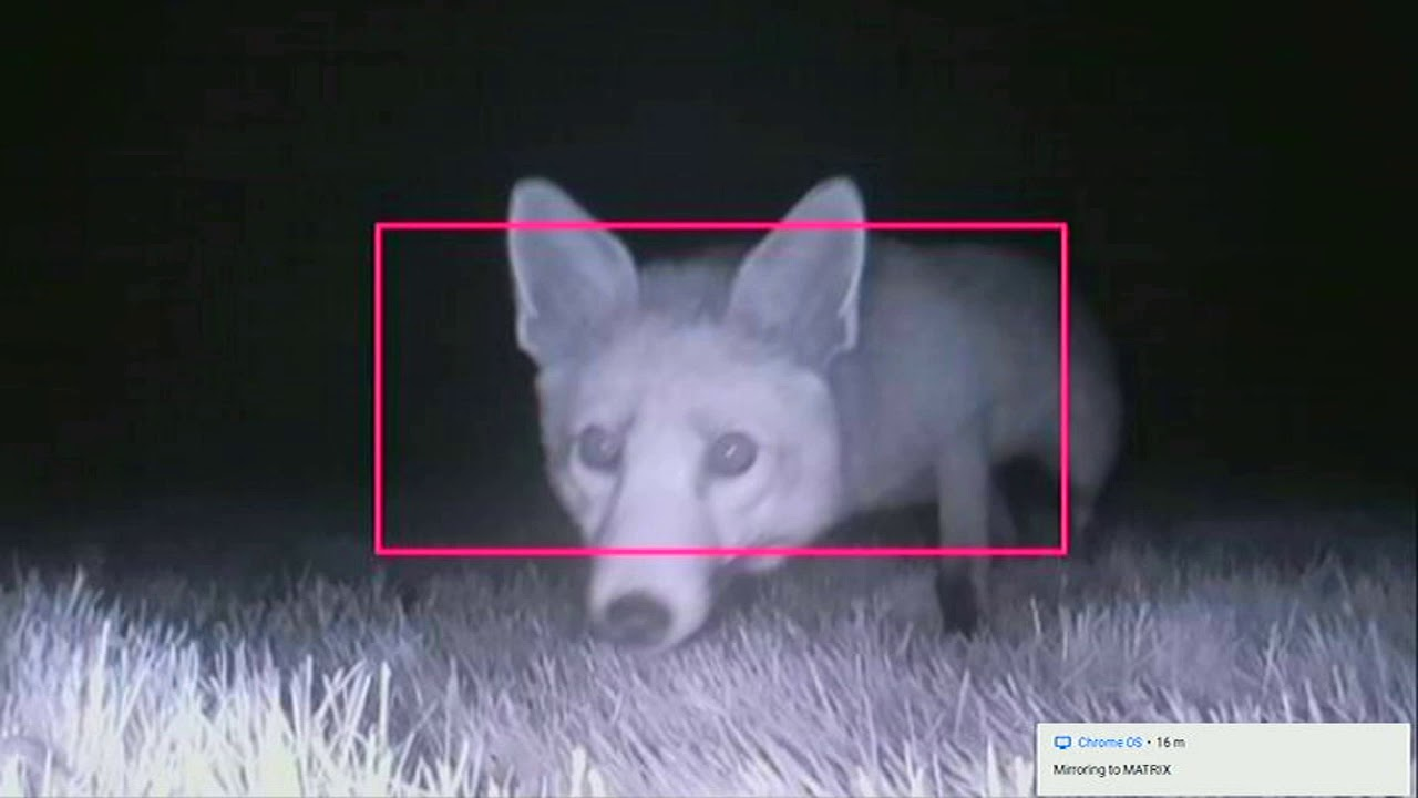 Image from Setting up a camera trap for nature with the Raspberry Pi