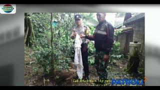 Calon pendeta ditemukan tewas disebuah perkebunan kelapa sawit, Ogan Komering Ilir, Sumatera Selatan.