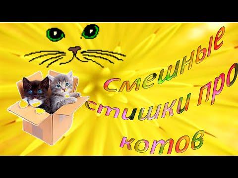 Самые смешные кошки. Забавные кошки. Видео про кошек