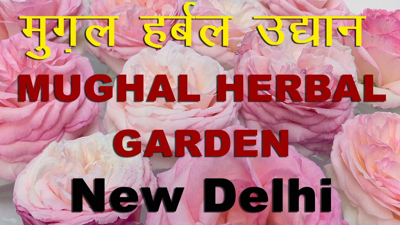 beautiful mughal garden, herbal garden, delhi mughal garden 2017