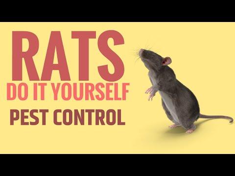 diy-rat-pest-control