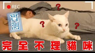 【豆漿實測】殘忍紀錄 不理撒嬌貓咪