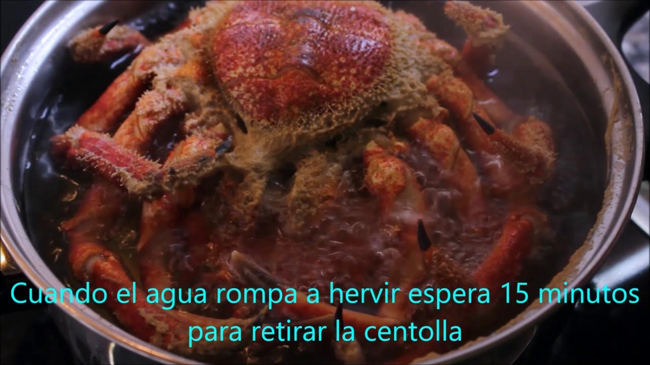 Cocinar Centollo | Cocer Centollo Gallego Youtube